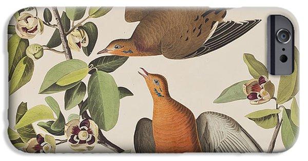 Botanical Drawings iPhone Cases - Zenaida Dove iPhone Case by John James Audubon