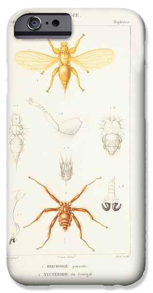 Zoological Paintings iPhone Cases - Zoological Atlas iPhone Case by MotionAge Designs
