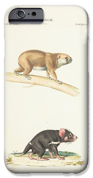 Zoological Paintings iPhone Cases - Zoological Atlas iPhone Case by Paul Gervais