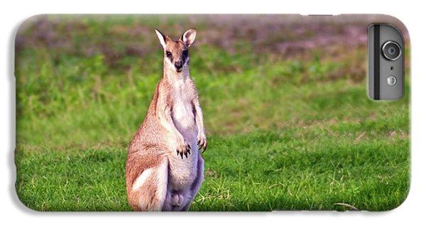 A Male Grey Kangaroos (macropus IPhone 6 Plus Case by Miva Stock