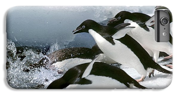Adelie Penguins IPhone 6 Plus Case by Art Wolfe