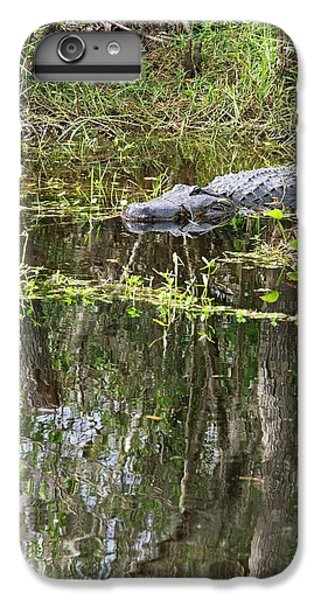 Alligator In Swamp IPhone 6 Plus Case by Jim West