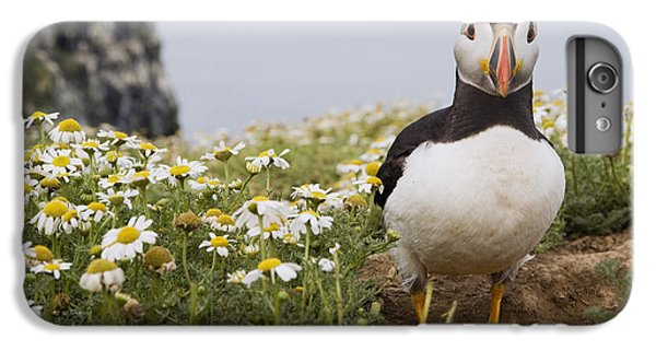 Atlantic Puffin In Breeding Plumage IPhone 6 Plus Case by Sebastian Kennerknecht