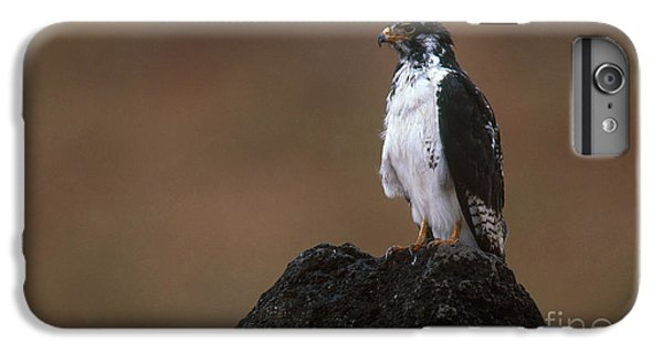 Augur Buzzard IPhone 6 Plus Case by Art Wolfe