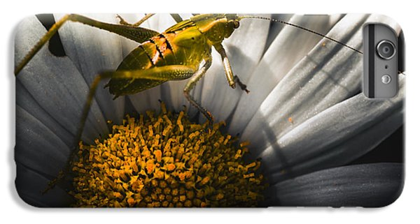 Australian Grasshopper On Flowers. Spring Concept IPhone 6 Plus Case by Jorgo Photography - Wall Art Gallery