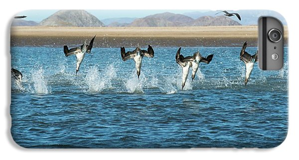 Blue-footed Boobies Feeding IPhone 6 Plus Case by Christopher Swann