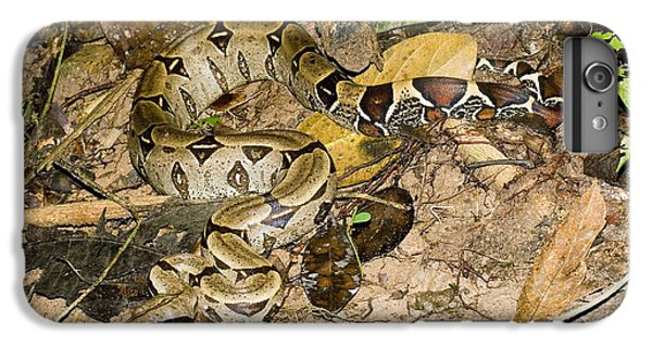 Boa Constrictor IPhone 6 Plus Case by Gregory G. Dimijian, M.D.