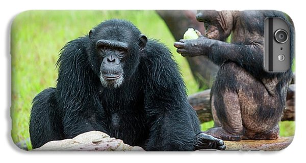 Chimpanzees IPhone 6 Plus Case by Pan Xunbin