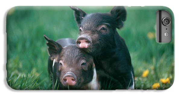 Domestic Piglets IPhone 6 Plus Case by Alan Carey