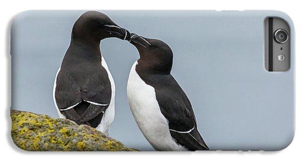 Europe, Iceland, Latrabjarg IPhone 6 Plus Case by Jaynes Gallery