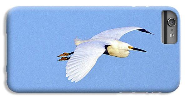 Florida, Venice, Snowy Egret Flying IPhone 6 Plus Case by Bernard Friel