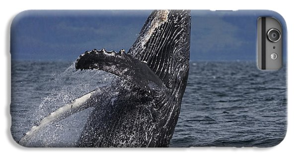Humpback Whale Breaching Prince William IPhone 6 Plus Case by Hiroya Minakuchi