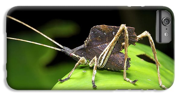 Leaf Mimic Bush-cricket IPhone 6 Plus Case by Dr Morley Read
