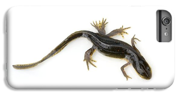 Mutated Eastern Newt IPhone 6 Plus Case by Lawrence Lawry