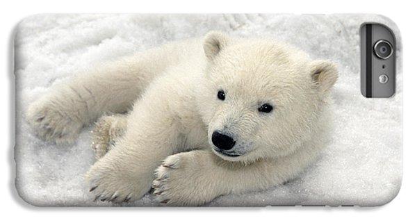 Polar Bear Cub Playing In Snow Alaska IPhone 6 Plus Case by Mark Newman