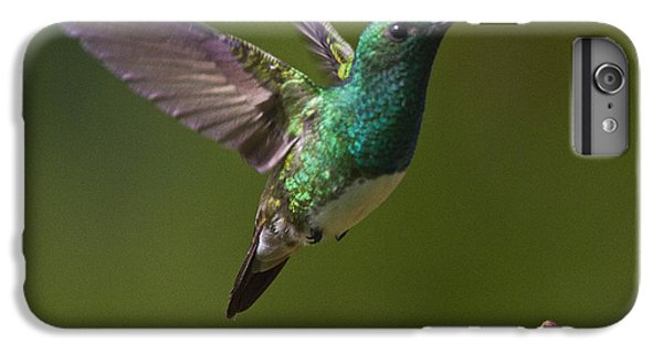 Snowy-bellied Hummingbird IPhone 6 Plus Case by Heiko Koehrer-Wagner