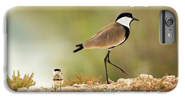 Spur-winged Lapwing Vanellus Spinosus IPhone 6 Plus Case by Photostock-israel
