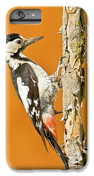 Syrian Woodpecker (dendrocopos Syriacus) IPhone 6 Plus Case by Photostock-israel