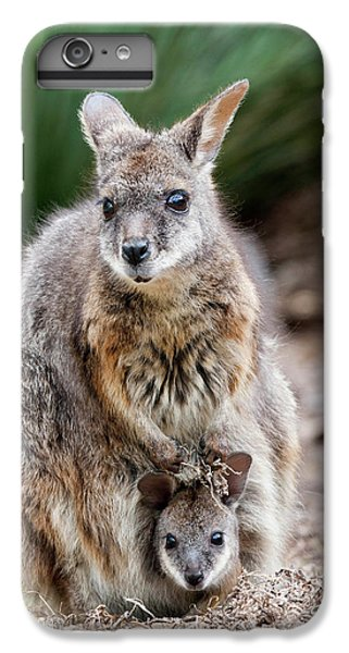 Tammar Wallaby (macropus Eugenii IPhone 6 Plus Case by Martin Zwick