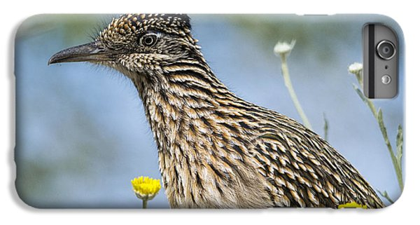 The Greater Roadrunner  IPhone 6 Plus Case by Saija  Lehtonen
