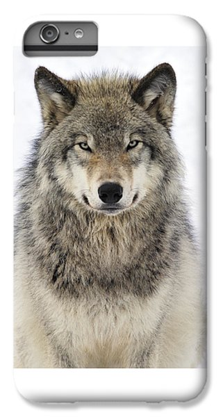 Timber Wolf Portrait IPhone 6 Plus Case by Tony Beck