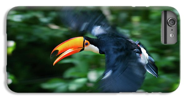 Toco Toucan (ramphastos Toco IPhone 6 Plus Case by Andres Morya Hinojosa