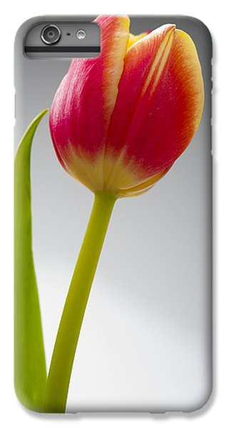 Tulip IPhone 6 Plus Case by Sebastian Musial