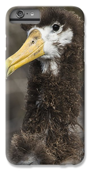 Waved Albatross Molting Juvenile IPhone 6 Plus Case by Pete Oxford