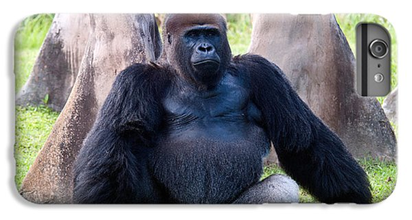 Western Lowland Gorilla IPhone 6 Plus Case by Mark Newman
