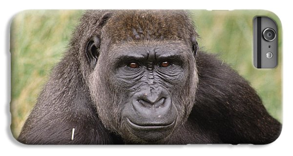 Western Lowland Gorilla Young Male IPhone 6 Plus Case by Gerry Ellis