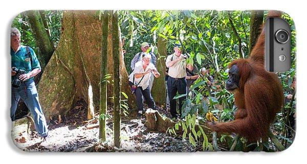 Sumatran Orangutan IPhone 6 Plus Case by Scubazoo