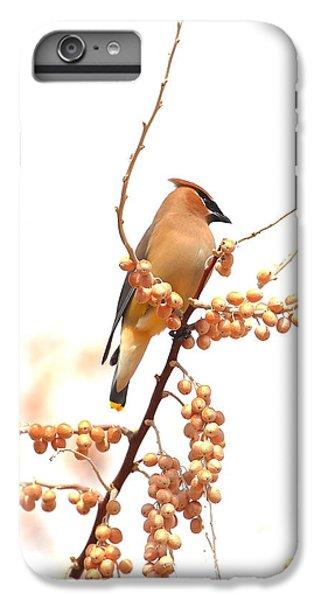 Cedar Wax Wing IPhone 6 Plus Case by Floyd Tillery