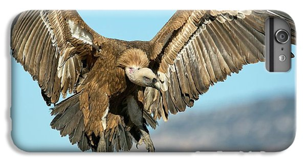 Griffon Vulture Flying IPhone 6 Plus Case by Nicolas Reusens