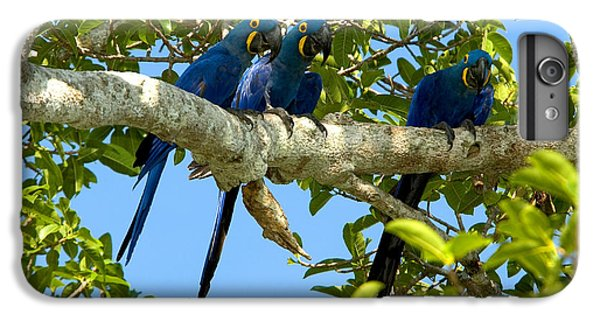 Hyacinth Macaws, Brazil IPhone 6 Plus Case by Gregory G. Dimijian, M.D.