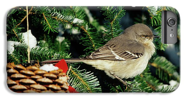 Northern Mockingbird (mimus Polyglottos IPhone 6 Plus Case by Richard and Susan Day