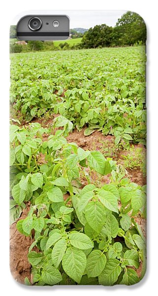 Potatoes Growing At Washingpool Farm IPhone 6 Plus Case by Ashley Cooper