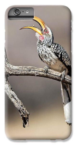 Southern Yellow-billed Hornbill IPhone 6 Plus Case by Tony Camacho