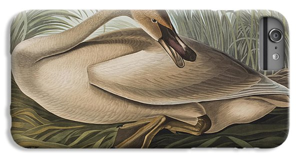Trumpeter Swan IPhone 6 Plus Case by John James Audubon