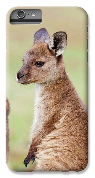 Western Grey Kangaroo (macropus IPhone 6 Plus Case by Martin Zwick