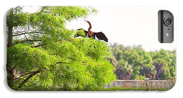 Anhinga Anhinga Anhinga On A Tree IPhone 6 Plus Case by Panoramic Images