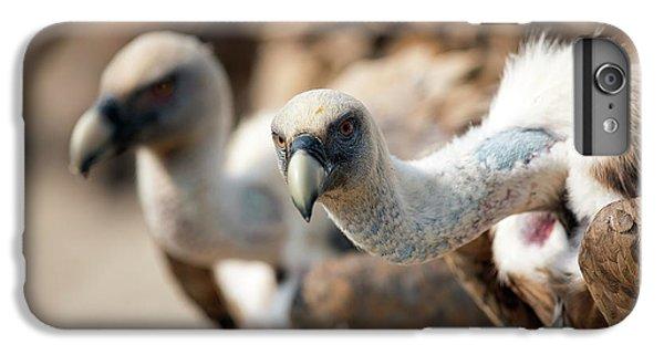 Griffon Vultures IPhone 6 Plus Case by Nicolas Reusens