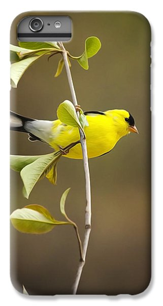 American Goldfinch IPhone 6 Plus Case by Christina Rollo
