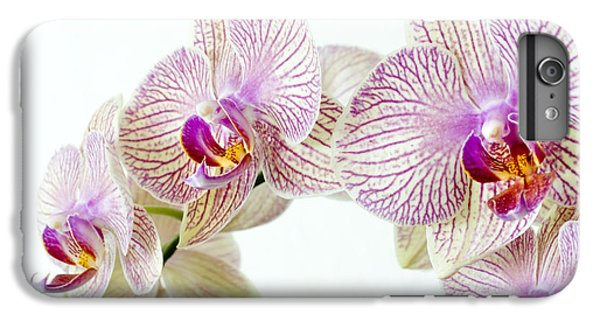 Phalaenopsis Orchid Phalaenopsis Sp IPhone 6 Plus Case by Lawrence Lawry