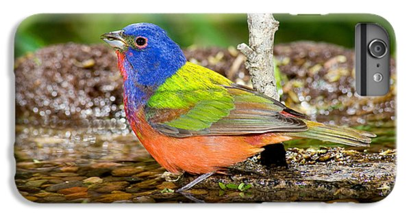 Painted Bunting IPhone 6 Plus Case by Anthony Mercieca