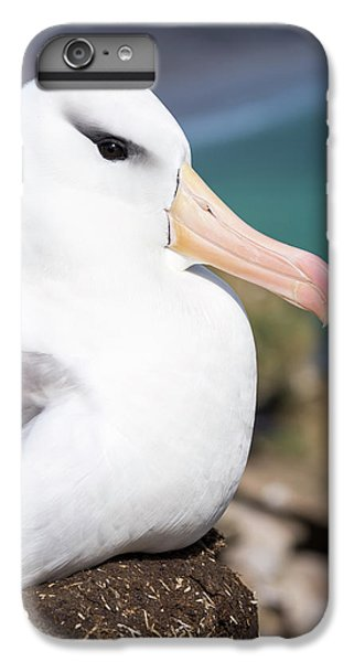 Black-browed Albatross (thalassarche IPhone 6 Plus Case by Martin Zwick