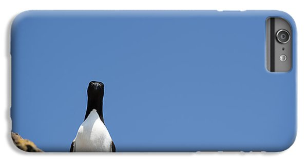 A Curious Bird IPhone 6 Plus Case by Anne Gilbert