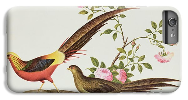 A Golden Pheasant IPhone 6 Plus Case by Chinese School