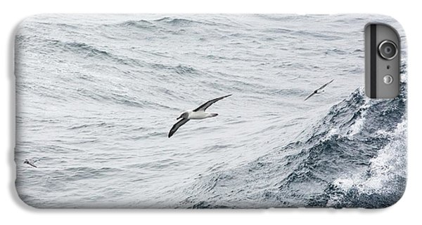 A Grey Headed Albatross IPhone 6 Plus Case by Ashley Cooper
