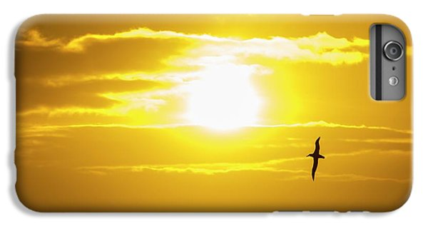 A Wandering Albatross IPhone 6 Plus Case by Ashley Cooper