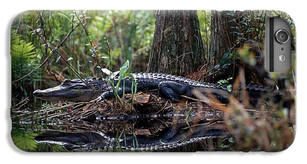 Alligator In Okefenokee Swamp IPhone 6 Plus Case by William H. Mullins